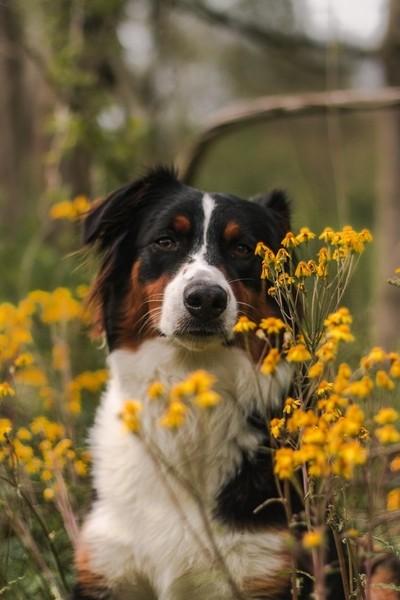 Izzy In Yellow Flowers