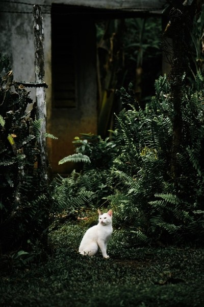 A small white cat in the wildernes