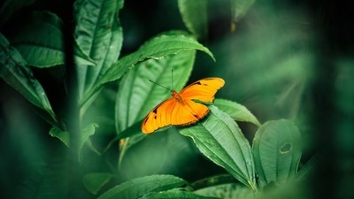 Beautiful yellow butterfly on green leafs