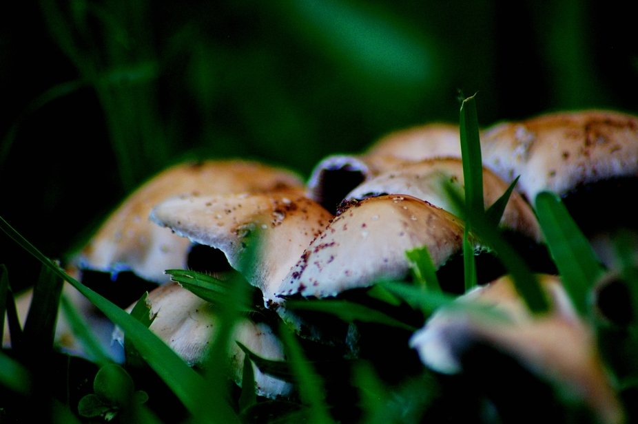 Wild mushrooms...JPG