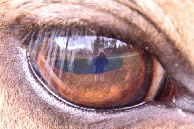 Close enough to get my reflection in an elks eye