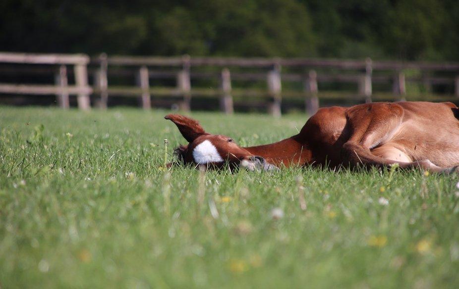 Foal of 2020  2/05/2020  Withyslade Farm