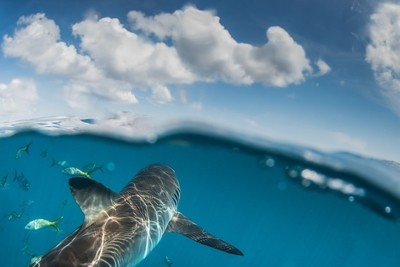 The shark and the sky above