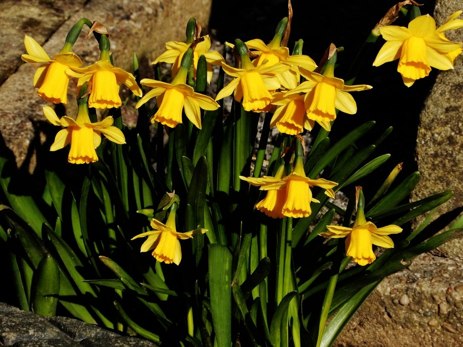Spring In The Garden
