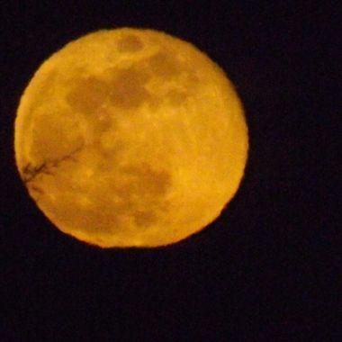 Blossom Moon