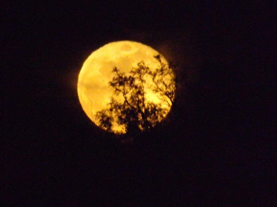 Blossom peeking Moon