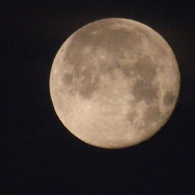 Majestic Blossom Moon