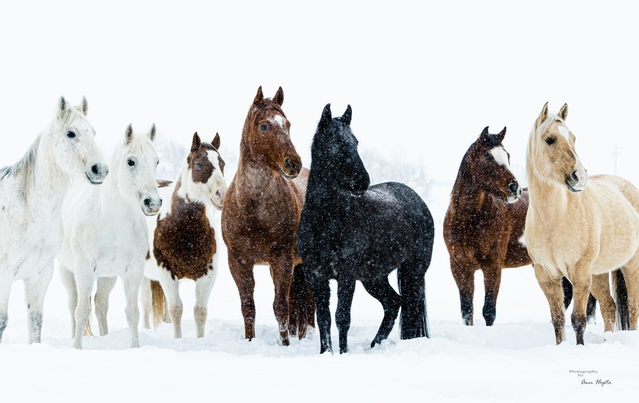 Something outside of the frame caught the attention of this group of ranch horses.