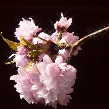 Glistening blossom