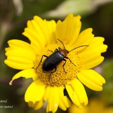 Flor silvestre con insecto