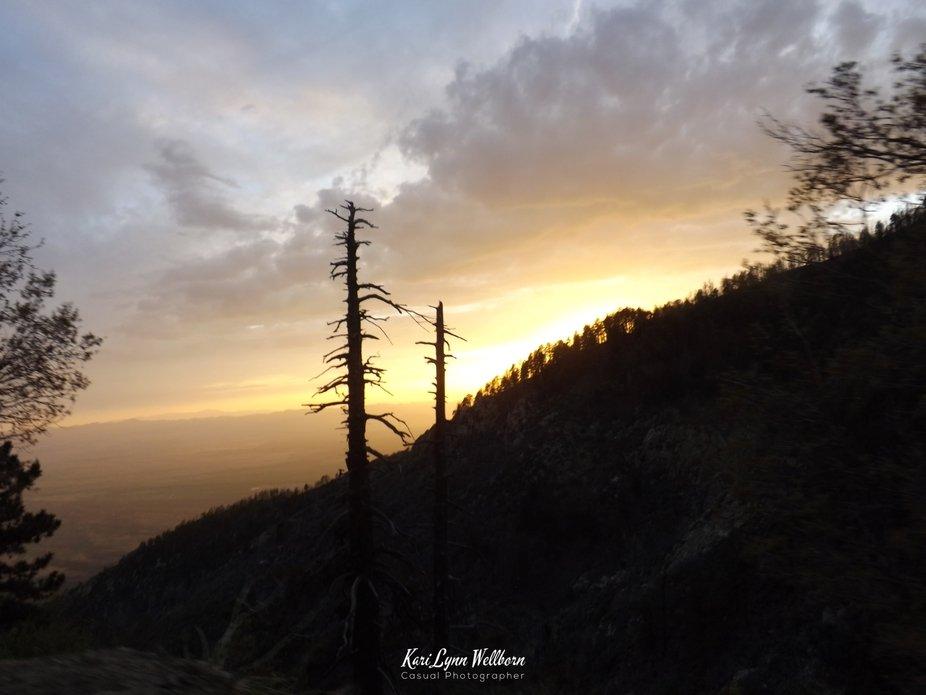 Swift trail arrow trees at sunset