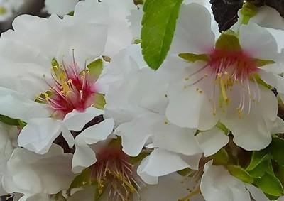 Olor primavera 2