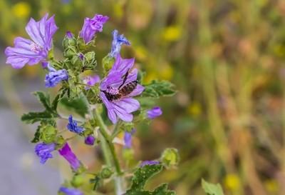 A bee onthe flower