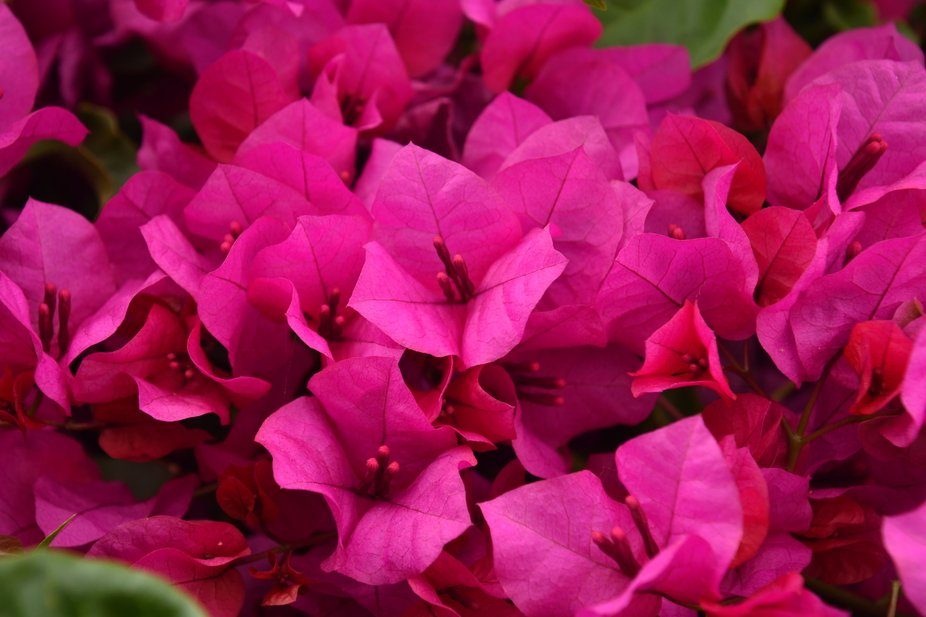 I love taking pictures of colorful flowers and this grouping had such a deep fuchsia color that I...