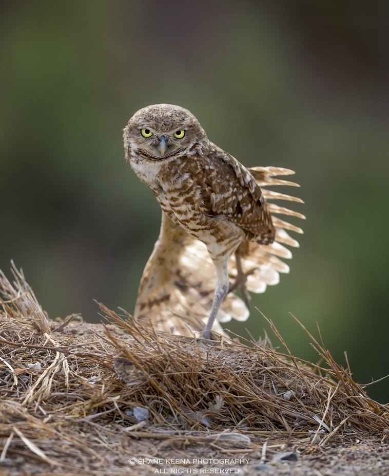 Picture Owls Photo Contest Winner