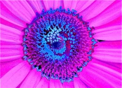 pinkflowerlr1_w11x14