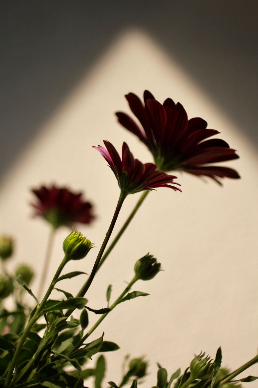 Bloom in the shadow