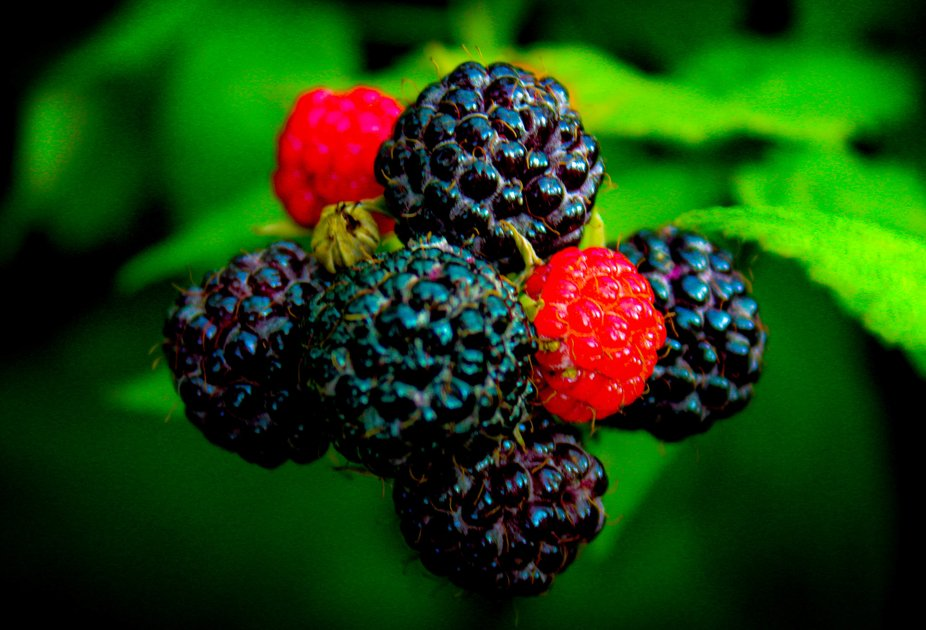 These are berries from my plants