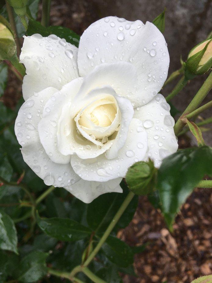 Rainy Spring Morning