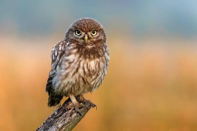 TURNEK_D_001 by daniturphoto - Picture Owls Photo Contest