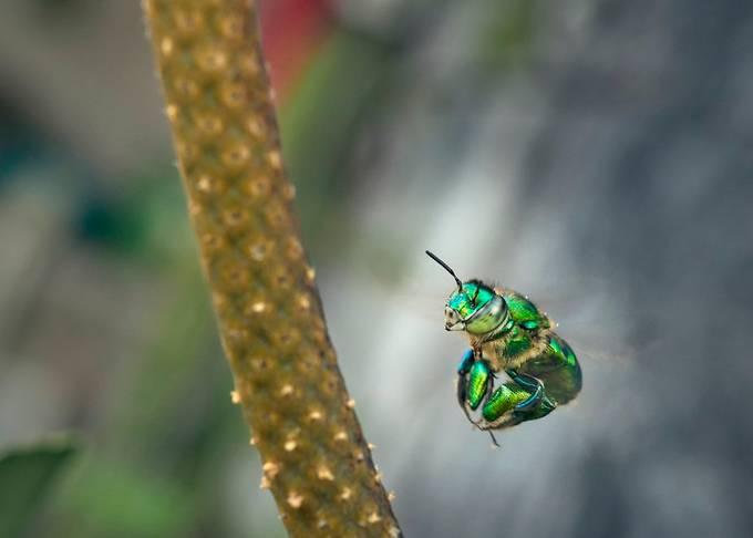 Flying Green Bee!!!