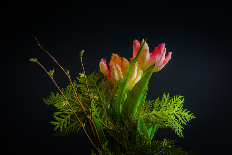Local flower grower sells the most wonderful photo subjects, a series of spring captures. Bliss
