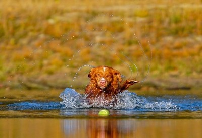 Fetch the ball!
