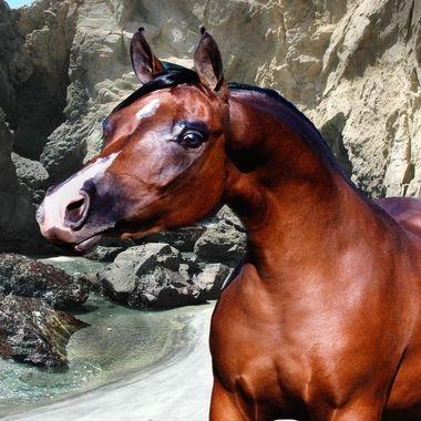 Amazing Arabian Stallion head shot