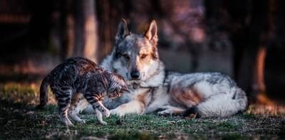 The Bodyguard (Wolf)