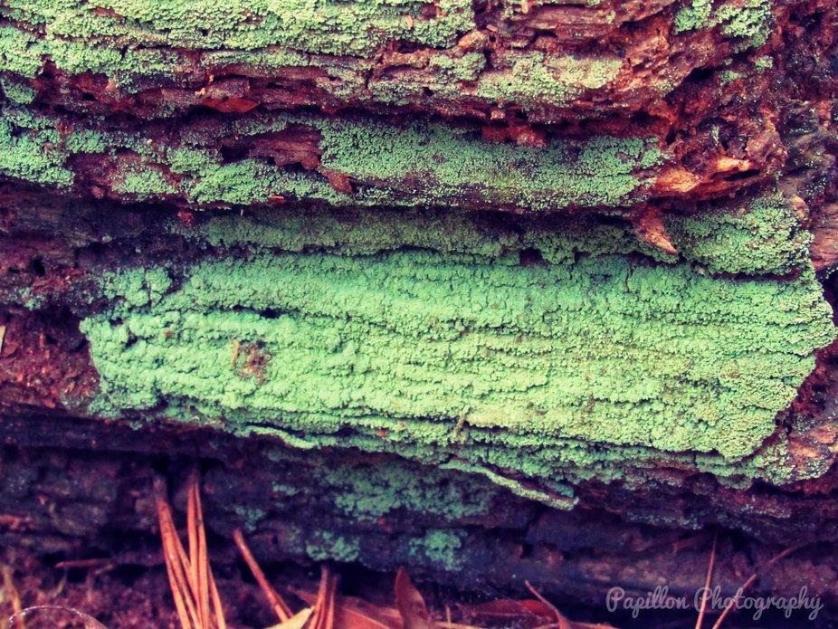 Green Mold