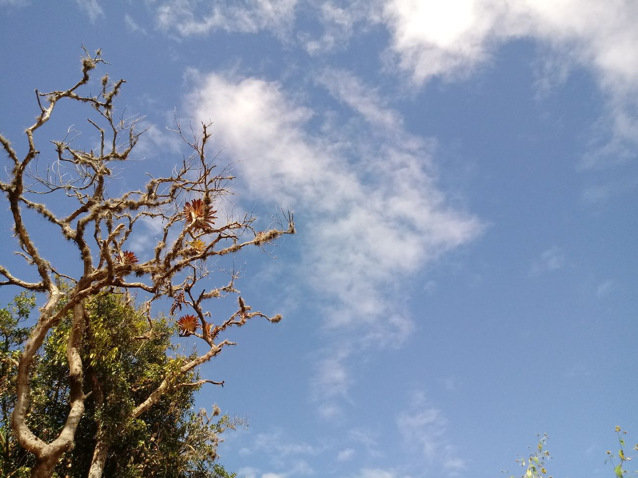 Branches sky