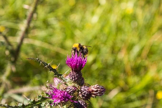 Pollen Taxi