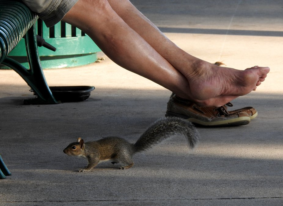 Squirrel at the feet of this resting Miamian.