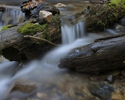 Water and Logs