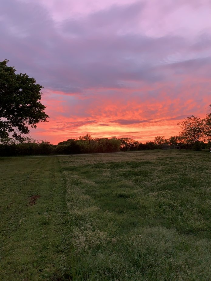 Looking over the green grass of the pasture at the colors in this sunset in its final minutes