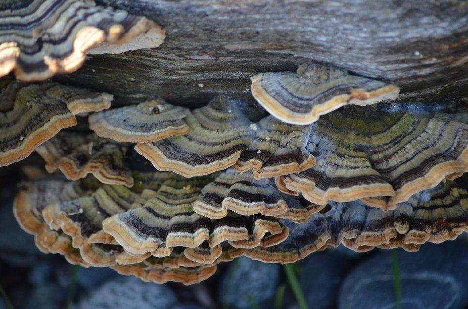 Color on a log