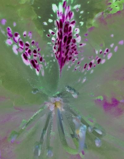 Rorschach Flowers