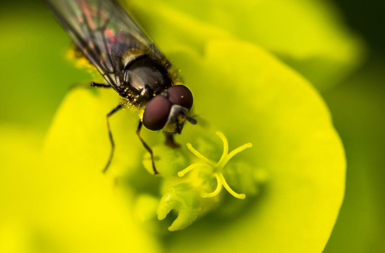 Happy little fly