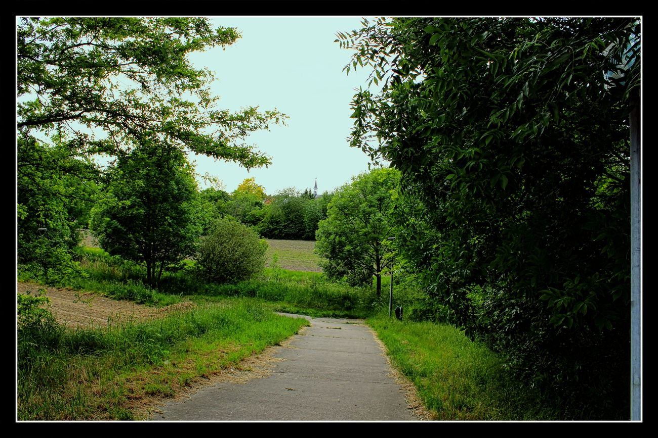 In Tienen there are beautiful views with lots of greenery and plants Sincerely Theo-Herbots-Photography https://groetenuittienen.blog/