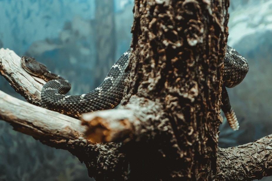 Hidden snake in tree