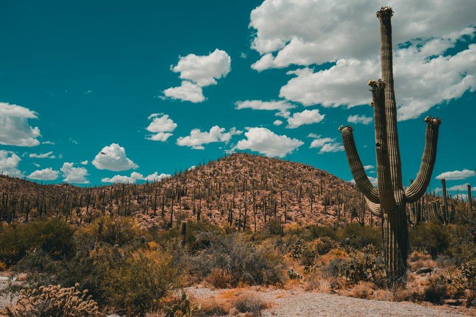 Saguaro and the Big Blue