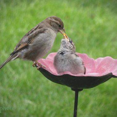Sparrow & Baby