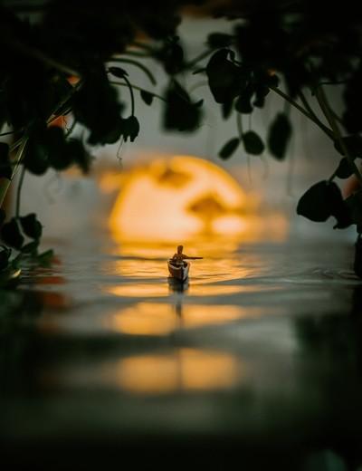Mini Everglades