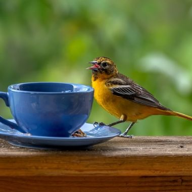 I get out the good dishes for my feathered friends!