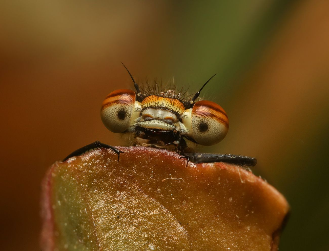 Picture Insects Photo Contest Winner