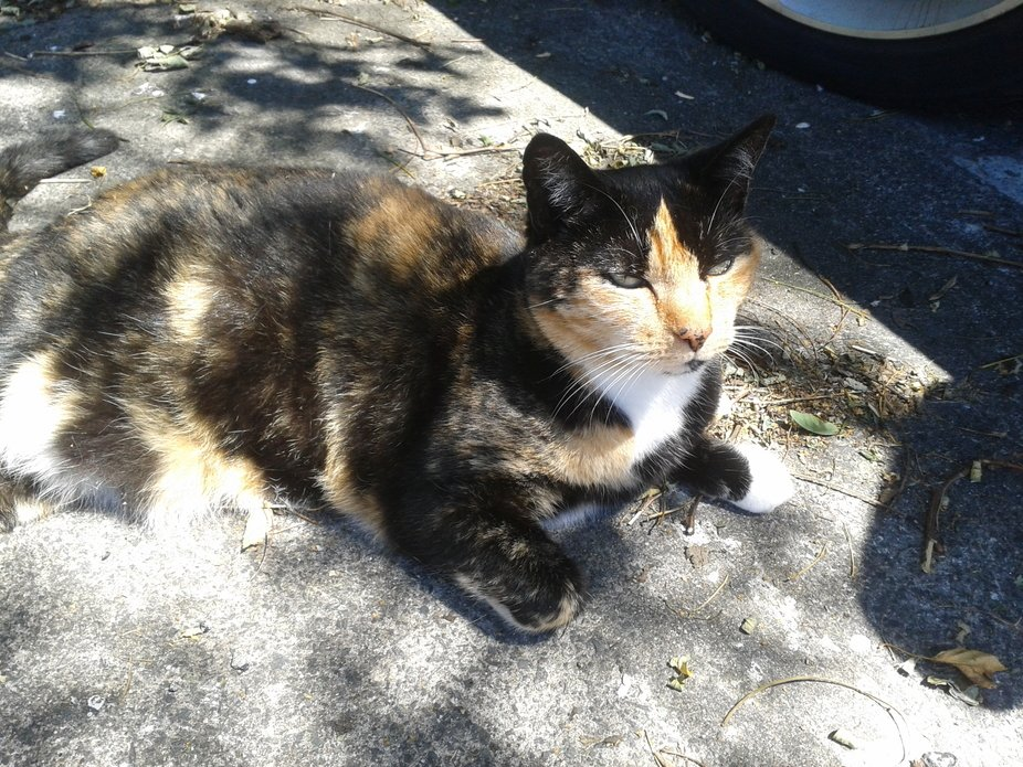 The cat from the supermarket staff carpark. So affectionate , but so big and heavy. My first frie...