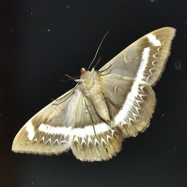 Moth on kitchen window.