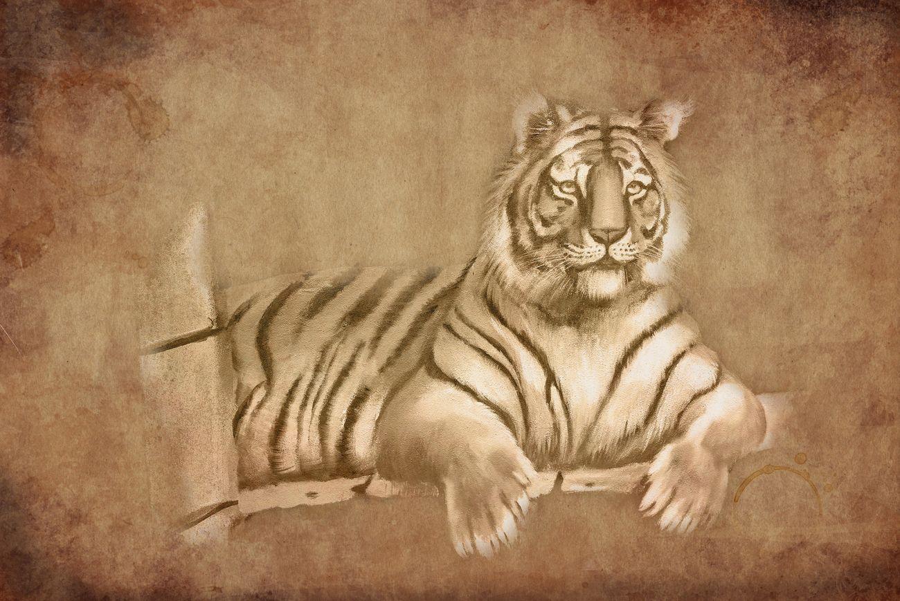 Photo Art - Tiger (2)