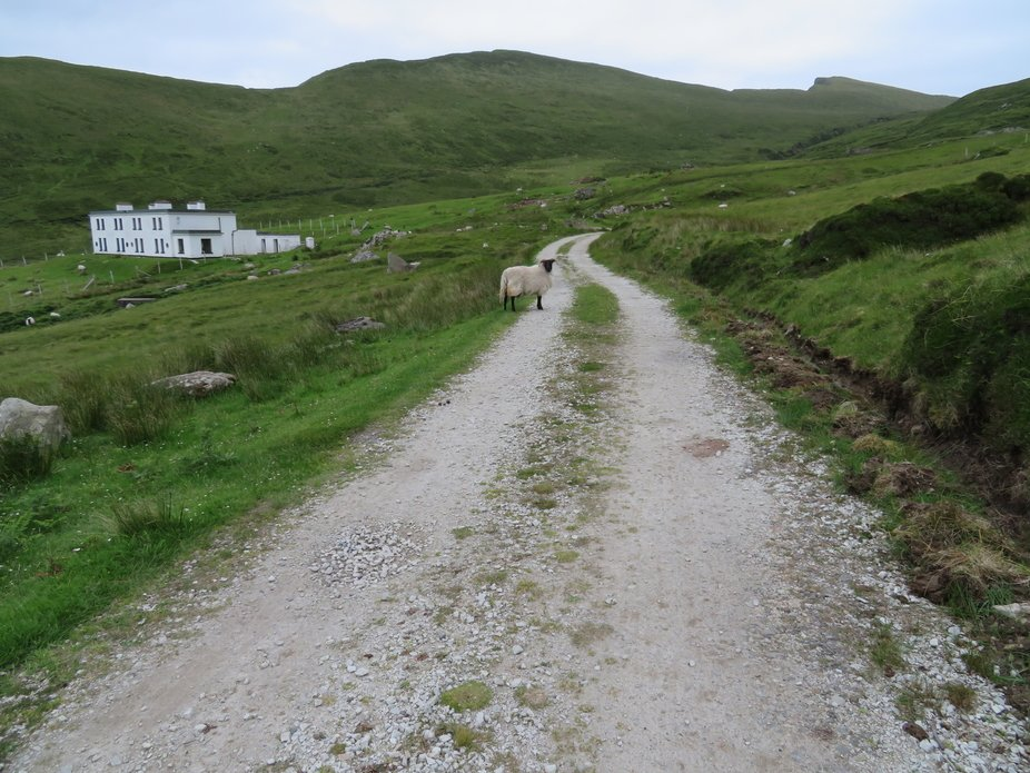 Walking through the hill county in Ireland you can't miss a sheep or two.