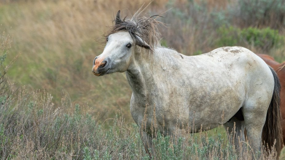 Wild Horse, Theodore Roosevelt National Park, May 2020